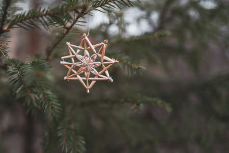 Straw stars hanging on a coniferous tree for Christmas