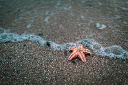 on the beach of the Baltic Sea lies an orange starfish