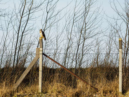 a bird of prey sits on a fence post in search of prey