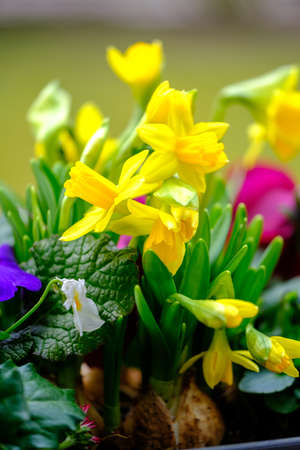 a close up of various colorful spring flowers