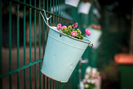 on the green fence hang white flower pots planted with spring plants
