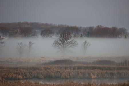 Wisconsin countryside under fog, sunrise spring,  morning sun