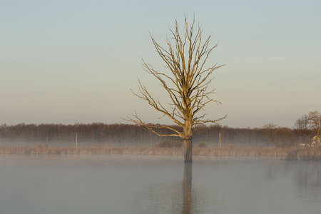 Isolated dry old Tree in Pond, beautiful scenery ,wonderful morning in misty haze