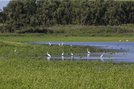 Swamps,conservation area, where many species of birds find food