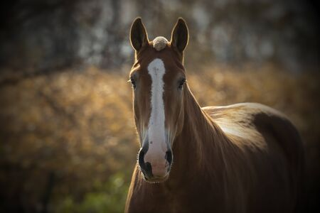 Beautiful horse on the pasture Imagens