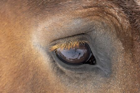 Detailed eye eautiful heavy draft horse