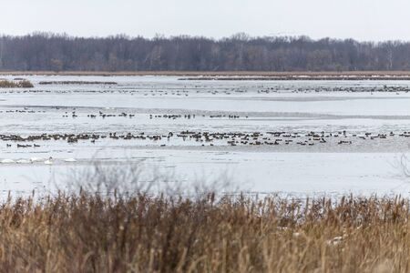 Migrating ducks heading south on state wildlife and refugee area in Wisconsin Imagens