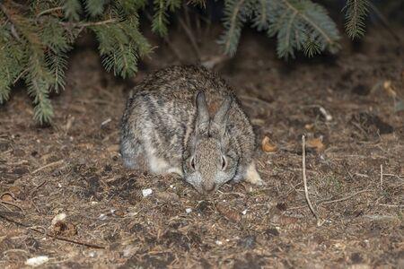 Wild rabbit in park,night scene