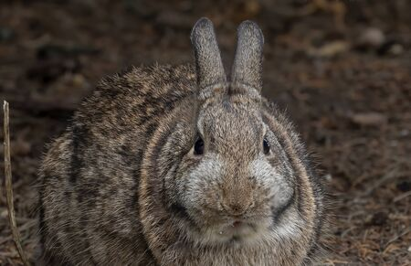 Wild rabbit photography close up in winter