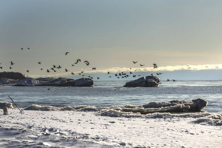 Ice floes and  flocks of Canadian geese. Lake Michigan in winter.Natural scene from Wisconsin.
