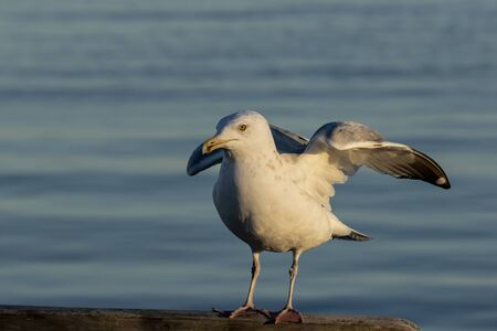 Seagulls on the harbor. Natural scene from Wisconsin.