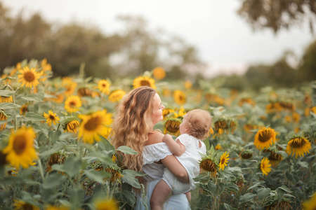 Young beautiful mother holds on hands a little curly daughter. Motherhood. Curly mom and little daughter in a sunflower field. Stock Photo