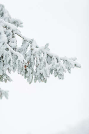 Trees in the snow. Beautiful winter. Winter.
