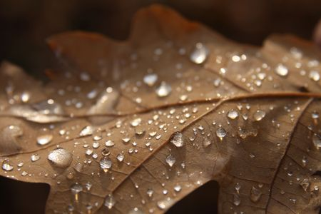 Autumn brown sheet in dew drops photo