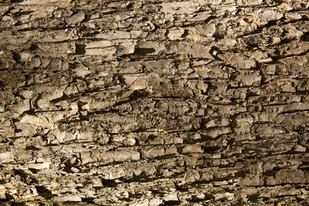 the bark of the tree in the entire frame of the Stock Photo - 9581115