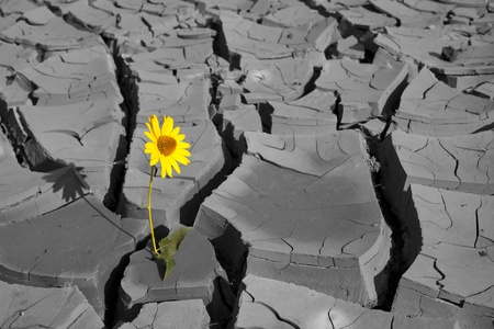 Lonely flower among cracks of soil after a heat photo