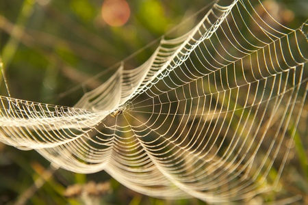 Web in dewdrops after a morning fog photo