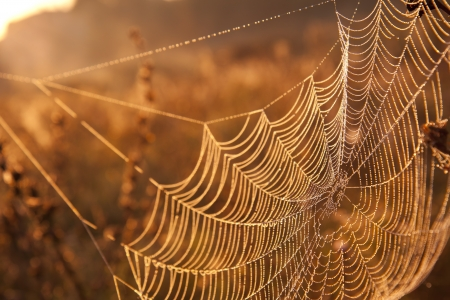 spider net: Web in dewdrops at sunrise in sun beams