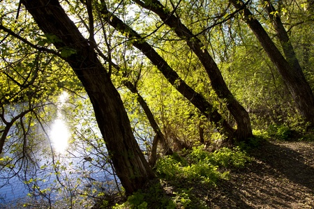 The spring sun on the river shines the wood photo
