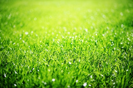 Close up of green grass with focus point  photo