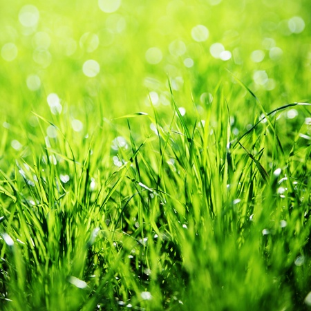 Extreme Close up of green grass with focus point Stock Photo - 12752223