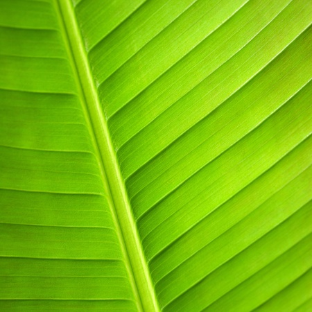 Extreme macro close up of green leaf Stock Photo - 13581607