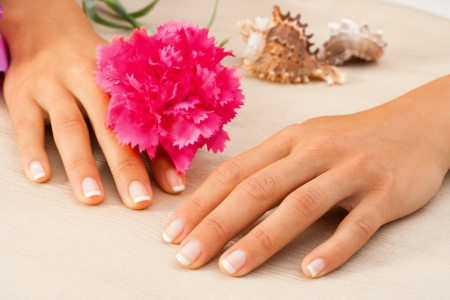 Macro close up of female hands with Flower and shells Stock Photo - 14260578
