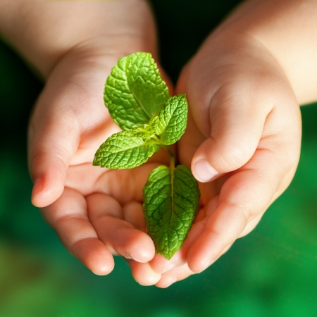 Macro close up of baby hands holding small green plant. Stock Photo - 17314340