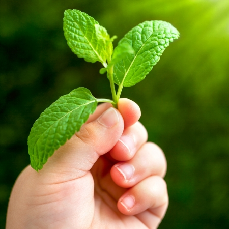 Macro close up of baby hand holding small green leaf. Stock Photo - 17314335