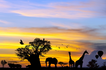 dreamscape: Conceptual african safari scene with animal silhouettes at sunset.