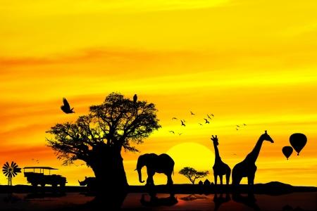 Conceptual african safari background with animal silhouettes at sunset. photo