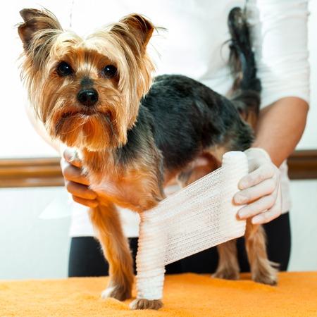 Close up of vet binding up dogs injured leg.