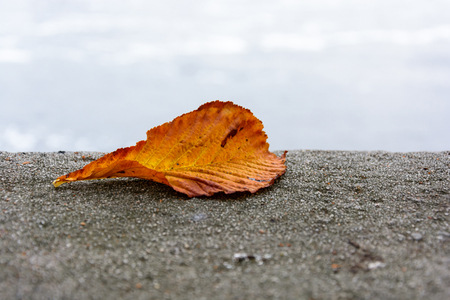retaining: Autumn colored chestnut leaf fallen on a retaining wall Stock Photo