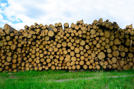 Pile of wood. Felled trees stacked on top of each other. Stocks on heating. Natural fuel. Mining trees. Extracted trees.