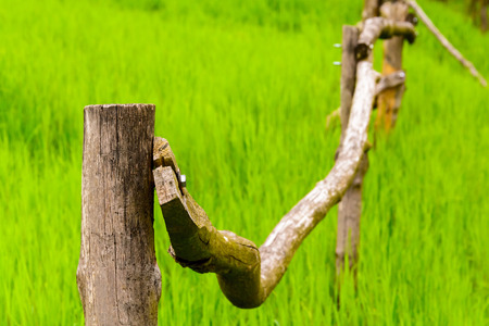 Wooden railing in the middle of a green meadow. Old fence for grazing.