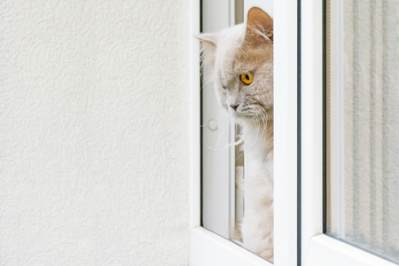 A gray cat looking out of the window. Cat in a window on a window sill. Looking around the home sweetheart