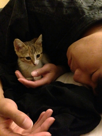 otganimalpets01: Sleepy kitty with sleepy owner.