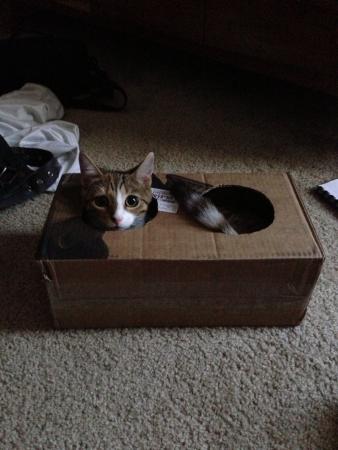 Kitty in the box.  Reklamní fotografie