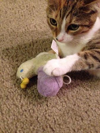 Kitten playing with a toy Reklamní fotografie