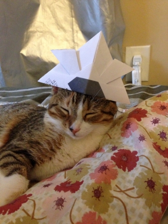 clothing: Kitty wears hat