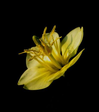 密接にトリミングされた黄色の花