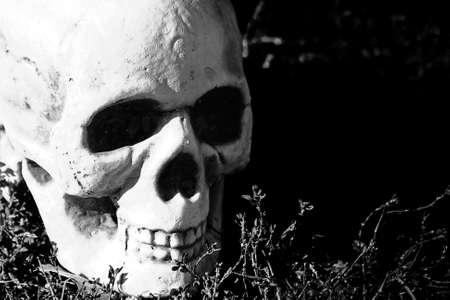 Halloween Skull Face In The Grass