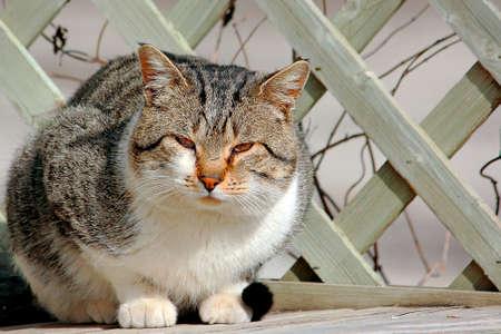 Stray Tomcat On Wooden Bench
