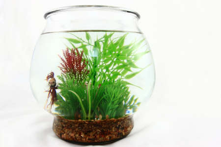 Glass Bowl With Red Beta Fish And Plants Stock Photo - 14312907