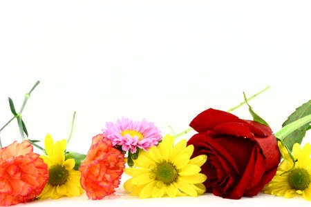 Assorted Isolated Flowers In A Row On White