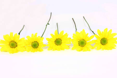 Five Yellow Daisies In A Row Isolated On White