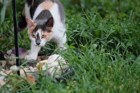 calico cat: A young calico cat exploring the great outdoors  Stock Photo