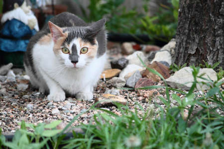 A young calico cat resting in the garden