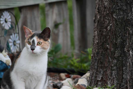 calico: Curious Calico Cat Outdoors