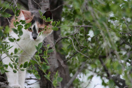 A young calico cat hiding among the leaves and branches of a small tree